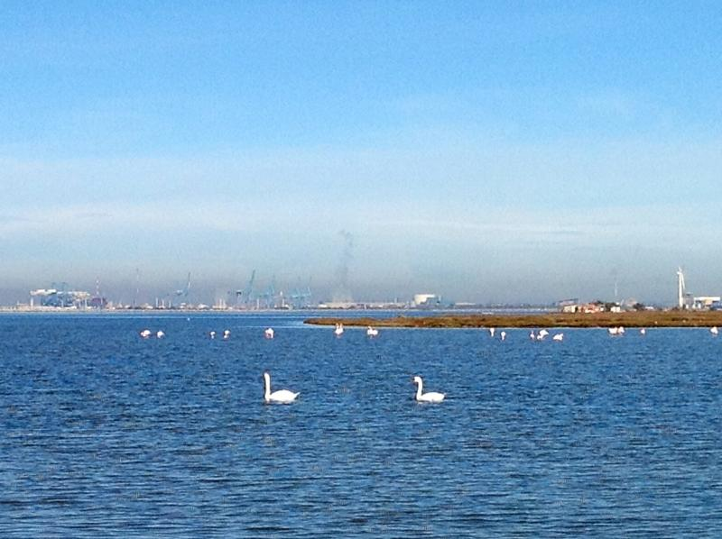 Flocks of flamingos and swans fill the brackish waters in the marshes near Plage Napoleon.